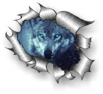 A4 Size Ripped Torn Metal Design With Wolf Blue eyes Motif External Vinyl Car Sticker 300x210mm